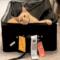 Cat flies 3540km in suitcase