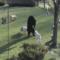 Bulldogs Vs Bear