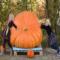 Mal's giant pumpkin